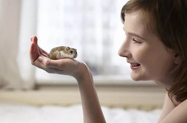 Entrenar hamster